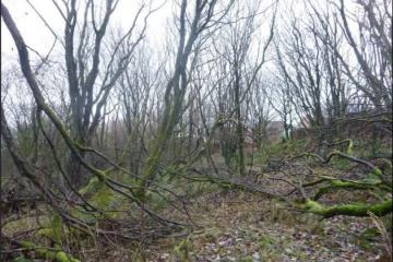 Bid to overturn Bolton Council's decision on woodland homes - Photo