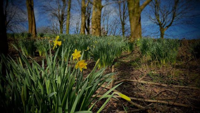 March at Moses Gate Country Park by John Norris.