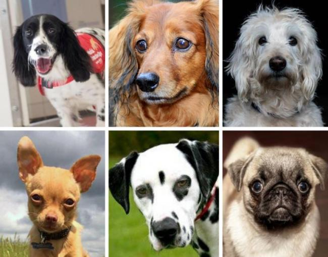 Would you pay £2,250 for a puppy? Here's a full list of Britain's priciest dogs. Picture: Newsquest