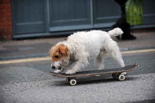 Skateboarding Brighton dog could get As-bone