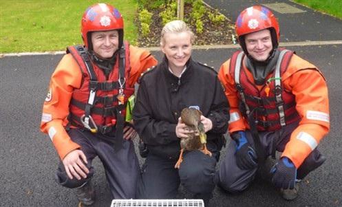 Duck rescued by firefighters in Westhoughton
