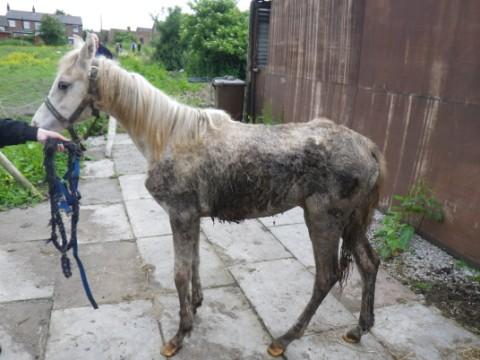 The horses were found underweight and in a terrible condition Pictures: RSPCA