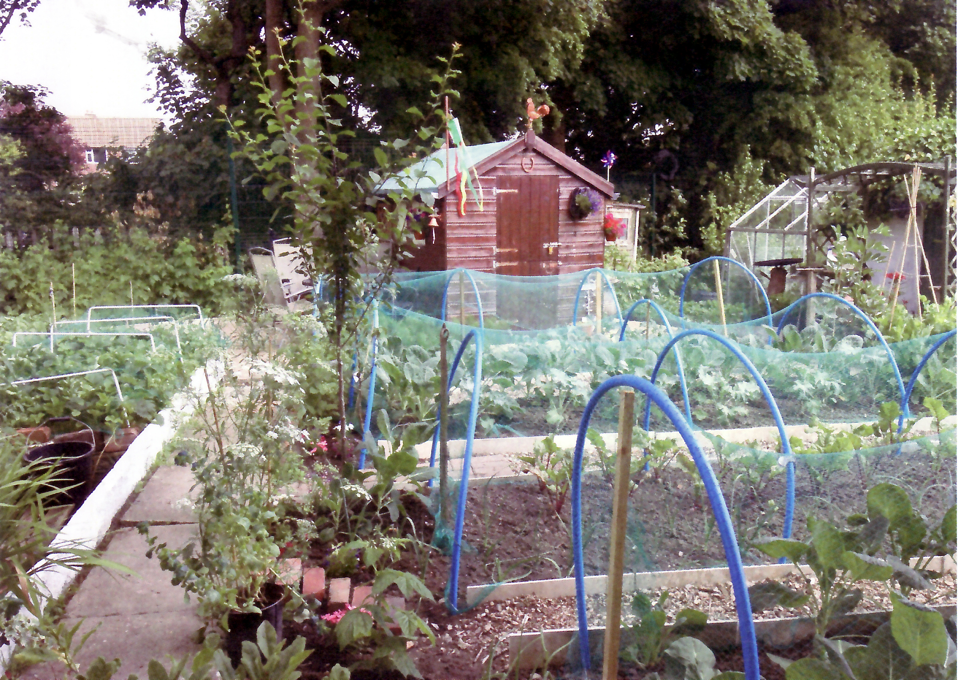 An award-winning allotment in Astley Bridge, belonging to Christine and Bernard Fallon