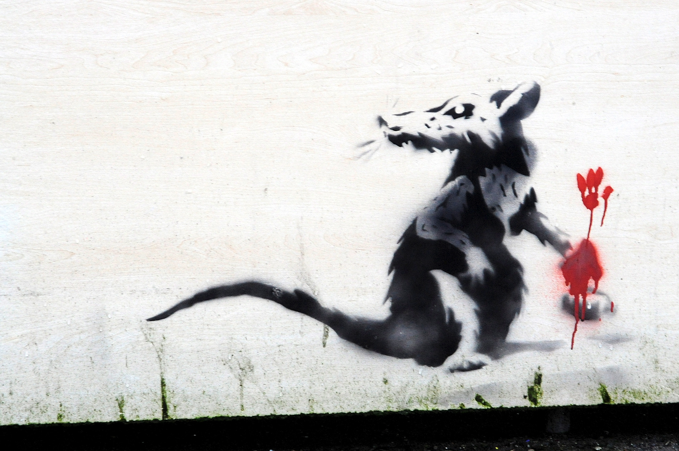 The Banksy-style rat graffiti that was spotted in Astley Bridge