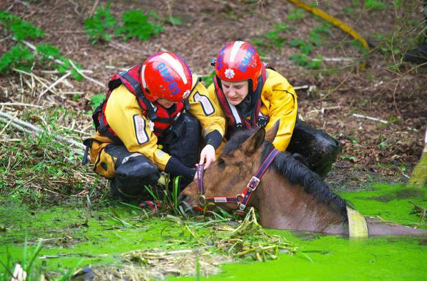 The Bolton News: Firefighters rescue 21-year-old one-eyed horse Ruby from the River Irwell near Ringley Bridge