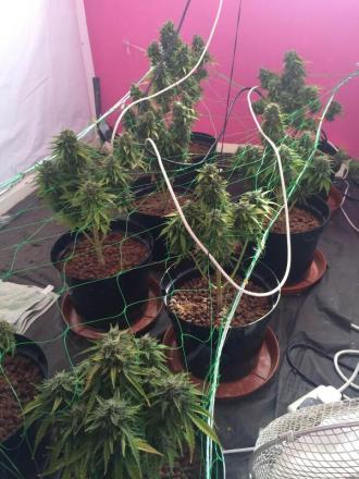 The cannabis farm that was found in Little Hulton after a child accidentally dialled 999