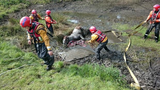 Team of 20 firefighters rescue horse from ditch