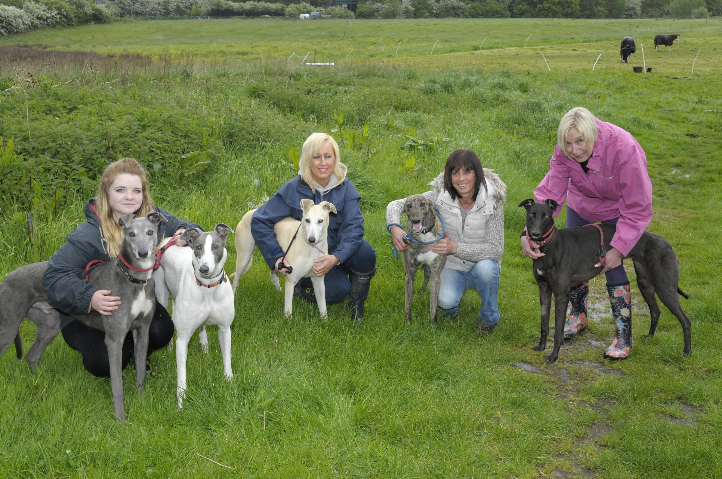 Staff with some of the dogs in need of homes