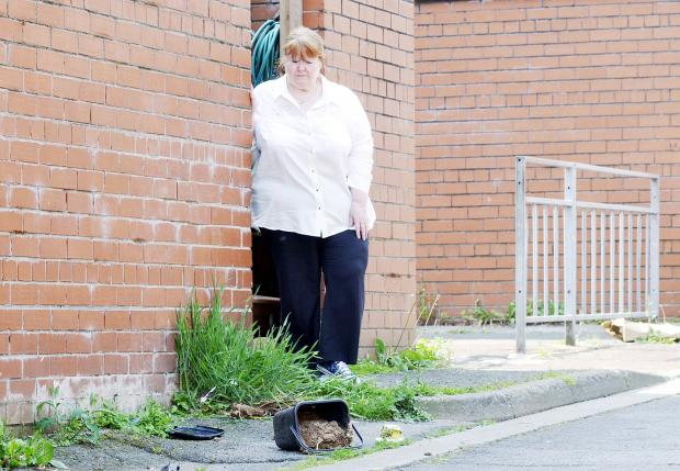 Gail Friars outside her back yard in Daubhill and the bin of dog dirt which the council has not moved
