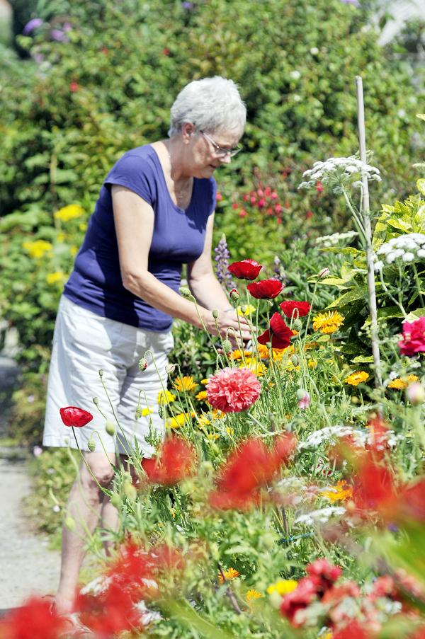 Scheme to encourage people to grow their own food on allotments