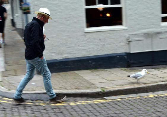 Ian McKellen pictured with the seagul in Rye.