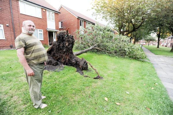 Stewart Crowther with the fallen tree