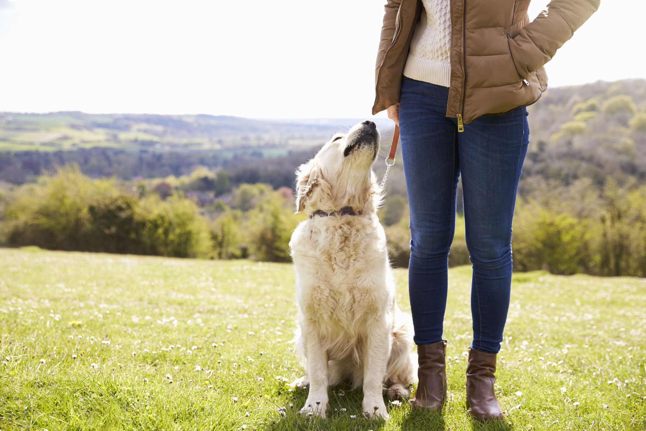 A generic photo of a dog looking up at its owner while on a walk. See PA Feature HEALTH Pets. Picture credit should read: PA Photo/thinkstockphotos. WARNING: This picture must only be used to accompany PA Feature HEALTH Pets.