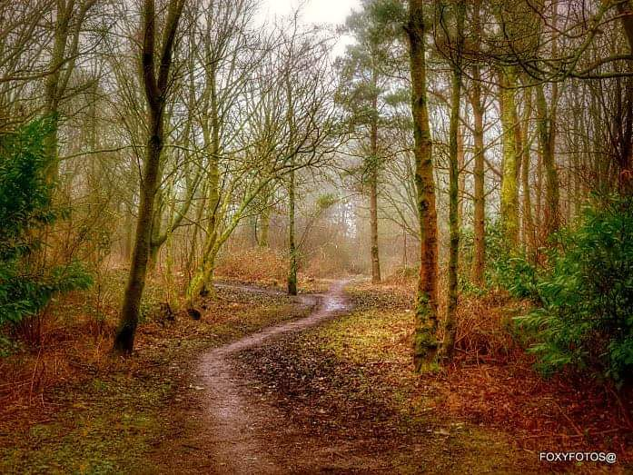 CAMERA CLUB: An autumn woodland walk by Dave Fox.